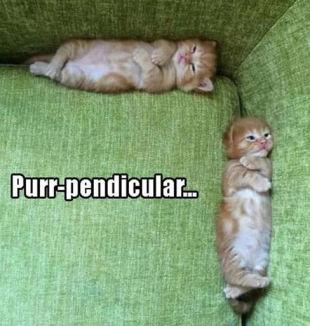 Purr-pendicular