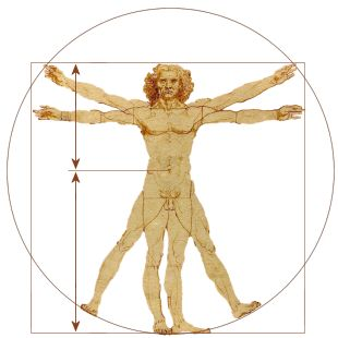 Golden ratio human anatomy
